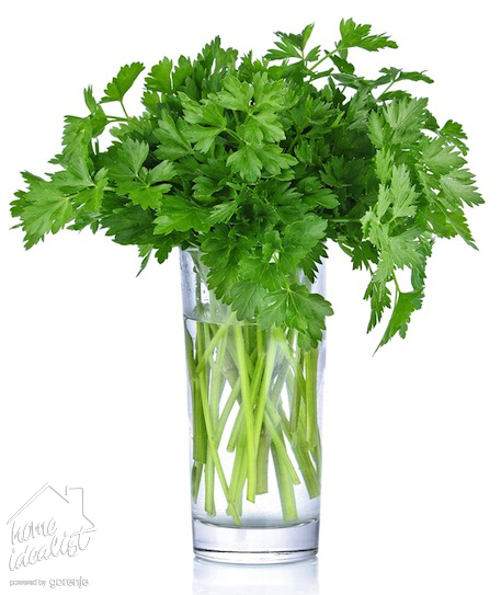 Parsley-bunch-in-a-glass_watermark